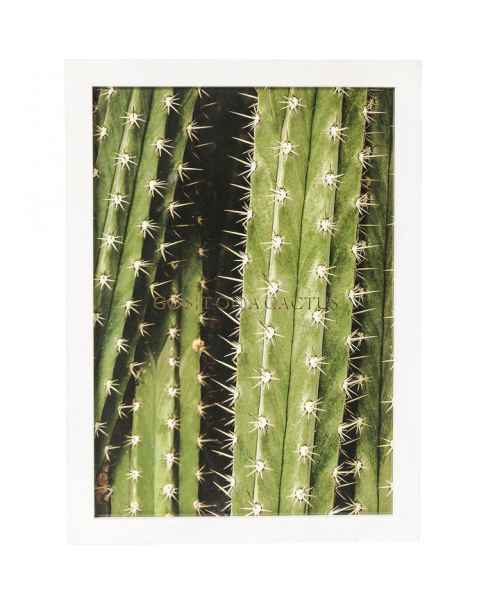 Картина в раме Cactus 45x33cm