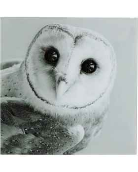 Картина на стекле Owl Face Two 60x60