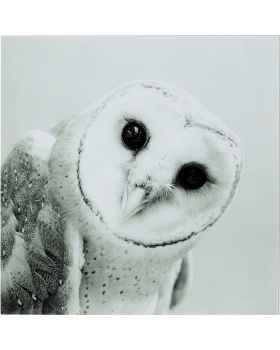 Картина на стекле Owl Face One 60x60