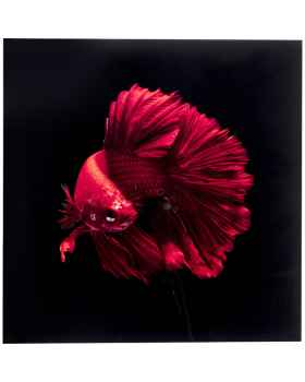 Картина на стекле Fire Fish 100x100